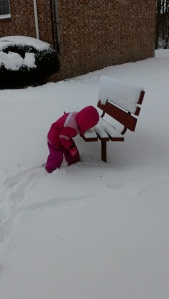 After deciding that snow is delicious she ate some off of the bench